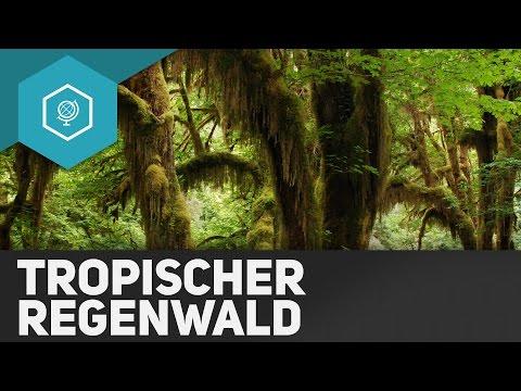 Der Tropische Regenwald - Die Tropen II - Klimazonen 2 ● Gehe Auf SIMPLECLUB.DE/GO