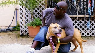 Melfi's Return to Villalobos | Pit Bulls and Parolees