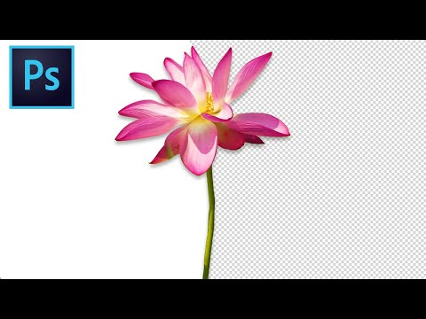 How To Remove White Backgrounds in Photoshop