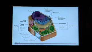 Biology Help: Biology 123 Chapter 4 The Cell