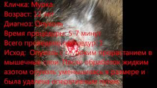 Кошка, 12 лет  Опухоль