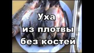 Секрет приготовления ухи из плотвы без костей по рецепту Николая Линника