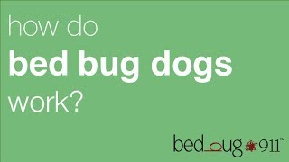 Bed Bug Dog Inspection | BedBug911