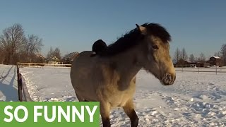 Super chill cat rides on the back of horse fr...