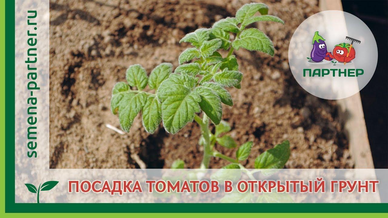 5 ноя 2017. Продажа агрокомпаний и земли сельхозназначения в украине. Другое имущество: дисковые борона, сеялки, культиваторы, погрузчики, бочки и др. Можно дополнительно купить еще 7000 га в этом же районе.