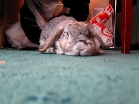 House Trained Pet Rabbit, Up Close & Personal - YouTube