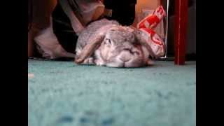 House Trained Pet Rabbit, Up Close & Personal