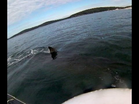 Kayaker Has Close Encounter With 5-metre Great White Shark, Australia