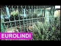 Humor 2014  me Sofijen- Kopshti Zologjik ( Eurolindi & Etc )