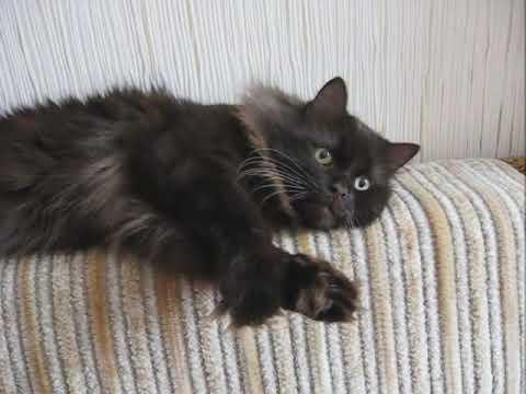 видео: Прощай мой Кот...