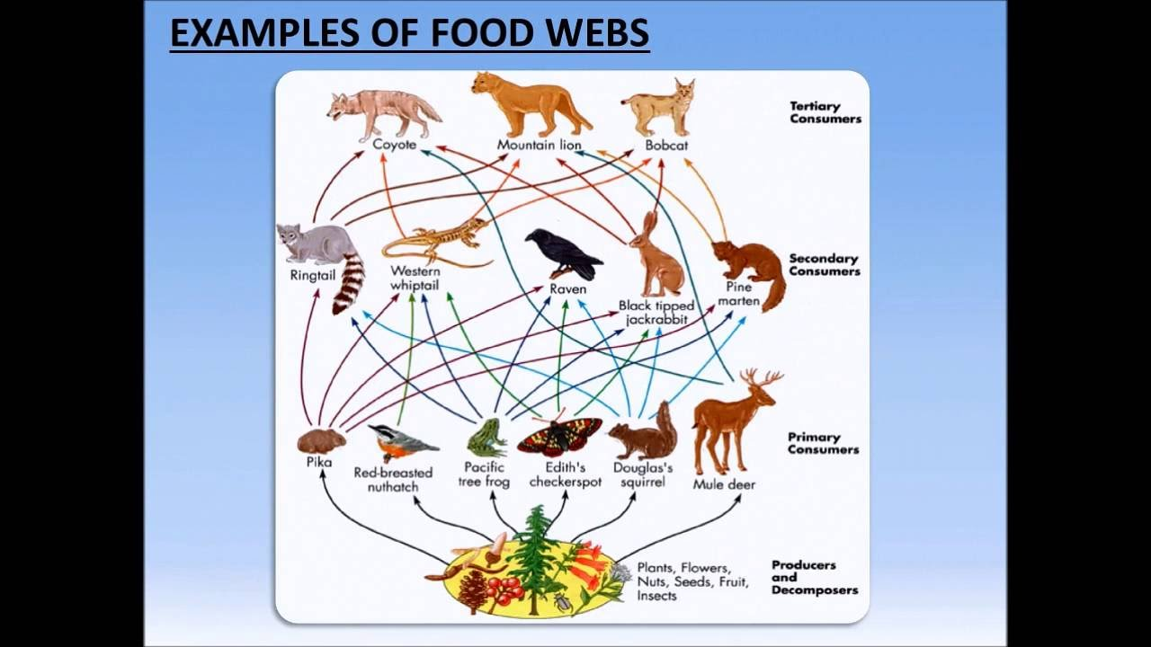 Food Webs Analysis Activity Powerpoint Tangstar Science Youtube