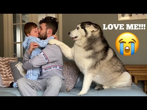 Hilarious Jealous Husky & Puppy When I Cuddle My Baby Prank! [CUTEST VIDEO EVER!]