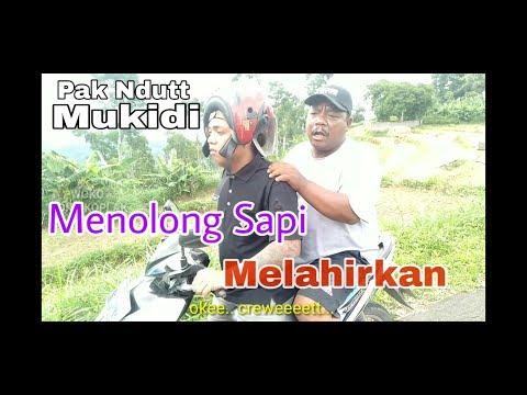 MENOLONG SAPI MELAHIRKAN - PAK NDUTT MUKIDI PART 1