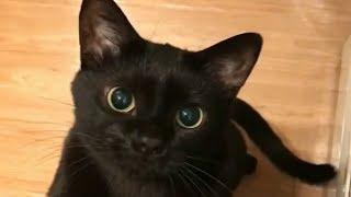 Смешные коты и собаки Милые щенки и котята Приколы с животными Калейдоскоп за 30 09 2018