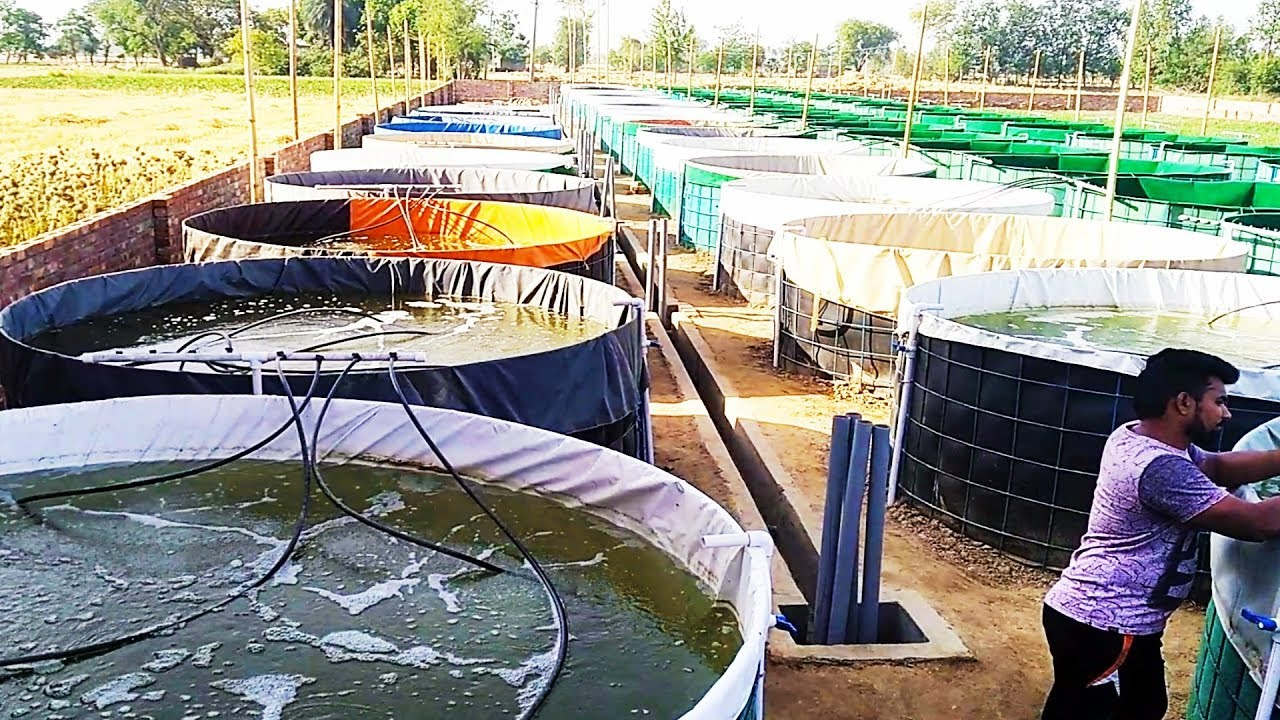Biofloc fish farming India's biggest project in Haryana (HD video)