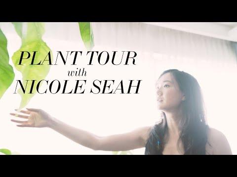 Plant Tour with Nicole Seah | Singapore HDB Apartment Plant Tour
