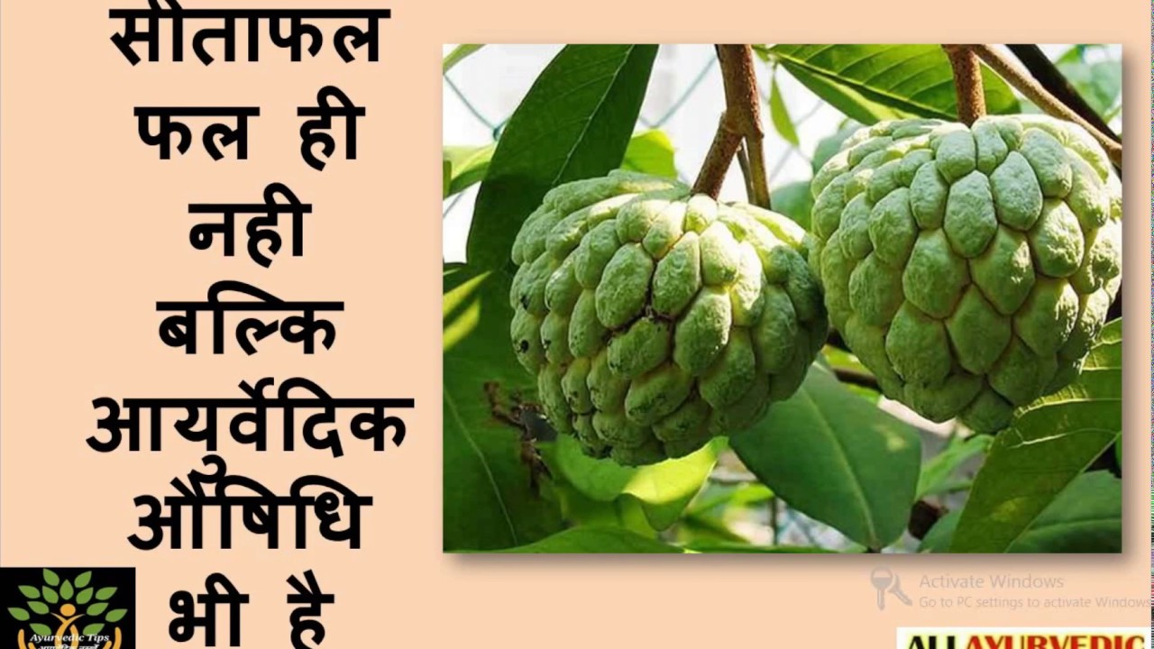 Image result for शरीफा के फल