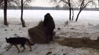 видео Новые насосы Big Kubota