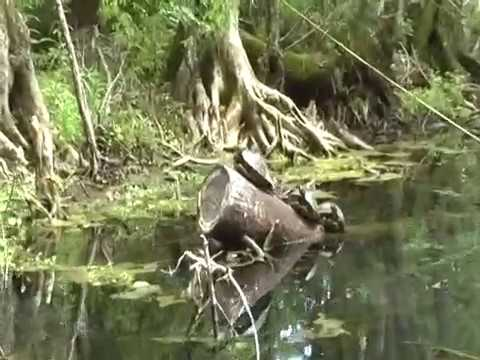 Silver Springs Florida attractions and nature reserve