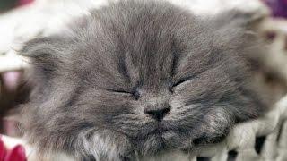 Смешные Кошки 2014 Funny Cats Compilation Выпуск #1