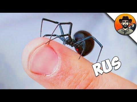 Вопрос: Что за паук появился у меня возле бочки с водой?