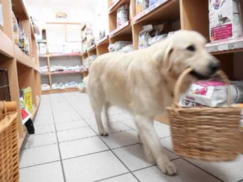 Clever Food. Clever Dog. Golden Retriever Shops For Her Own Snacks!