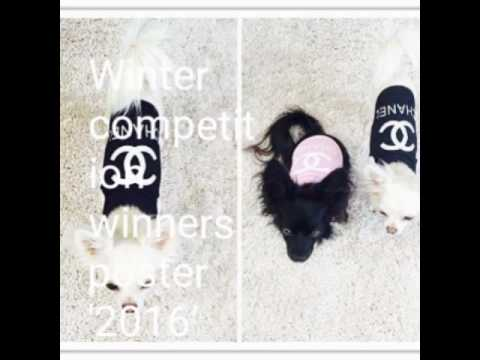 Heavenly chihuahua's competition winners.