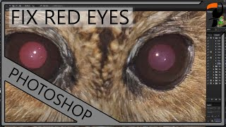 Nature Photography Workshop - Repairing Red Eyes