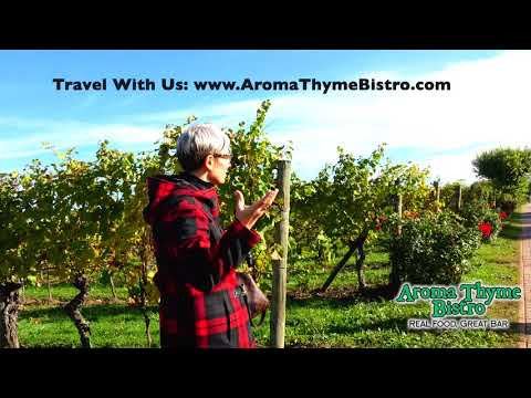 Zenato Winery Tour with Chef Marcus Guiliano