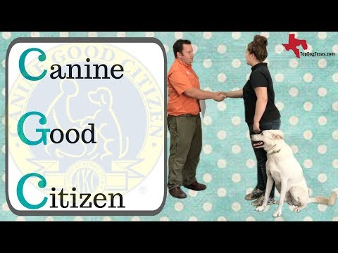CGC Example Test  |  Canine Good Citizen  |@TopDogTx