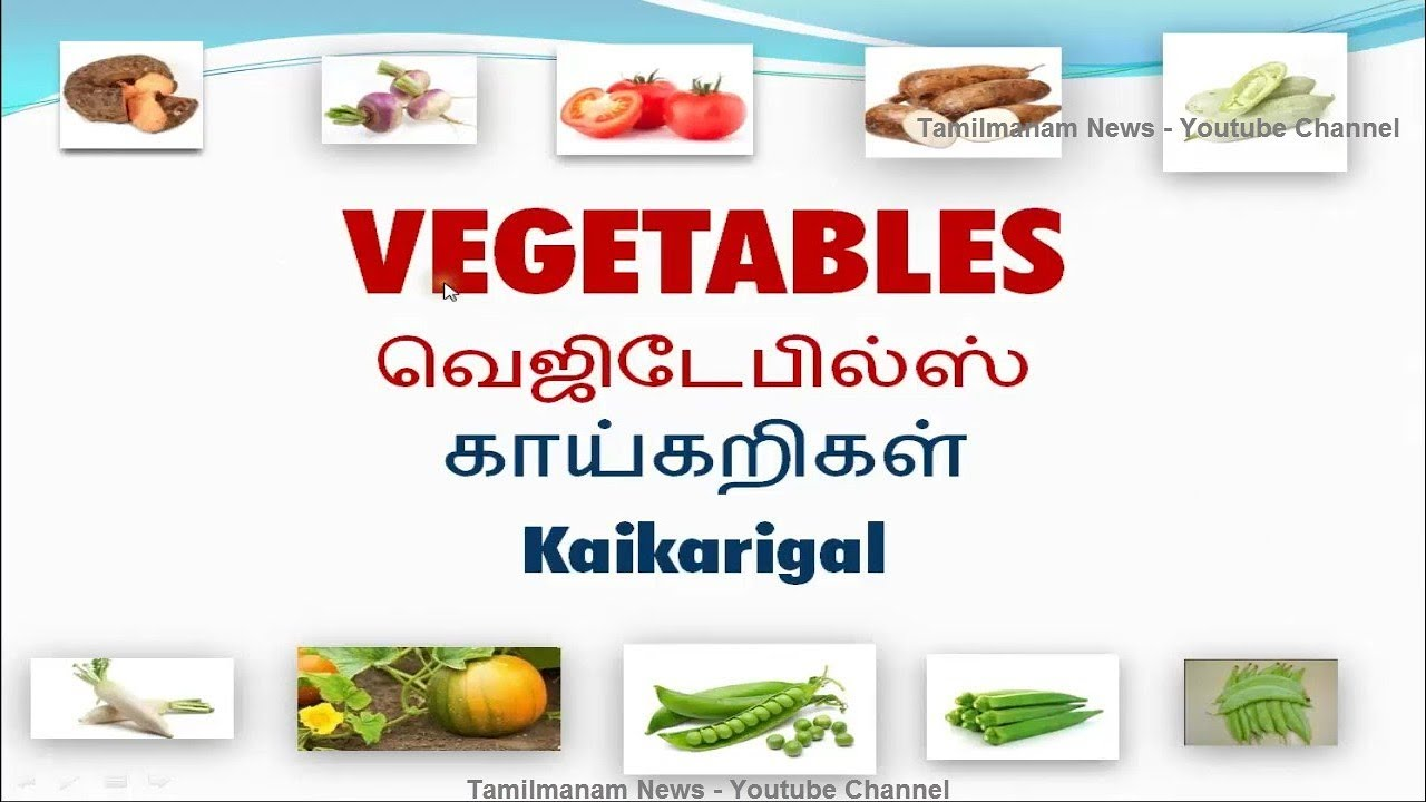 english vocabulary with tamil meaning pdf