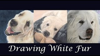 TUTORIAL #3- How to draw White Fur in color pencils - Channel Sheldene Fine Art