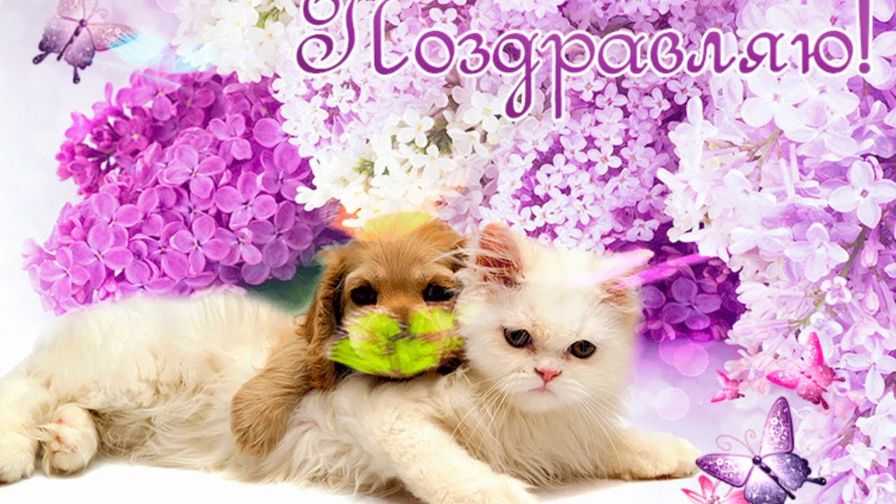 открытка сестре с котами как