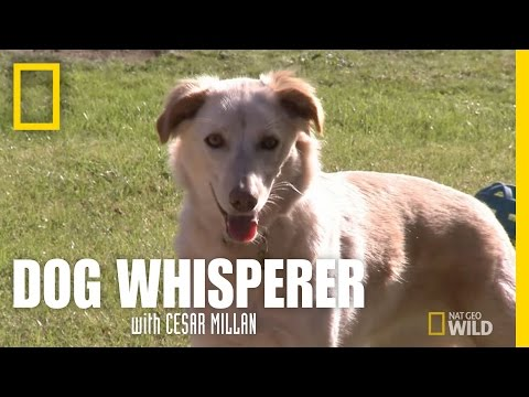 Reading a Dog's Signals | Dog Whisperer