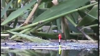 1-Покльовка КАРАСЯ на поплавкову вудку, риболовля на поплавок в заплаві річки Кубань. Fishing
