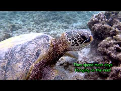 Hawaiian Reef Fish ID 1