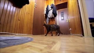 Видео про кота. Кот ждет хозяина и радуется его приходу.
