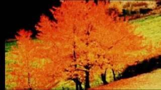"""Mannick """"J'aime l'automne"""""""