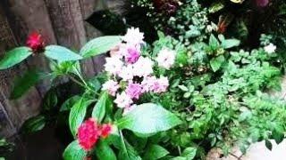 Fiz meu cantinho verde explodir de flores e folhas coloridas (confiram) – dicas e cuidados