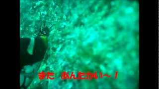 ガンちゃんの 石鯛調査 IN内之浦 thumbnail