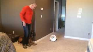 Fastest Dog Ever!! Performing Change Of Positions