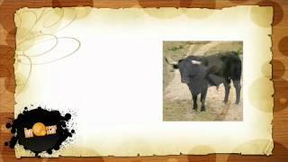 Говорить по испански - Урок ферма (Granja)