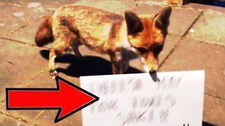A Message From A Fox In My Garden #KeepTheBan