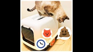 IoT Cat Litter Box!