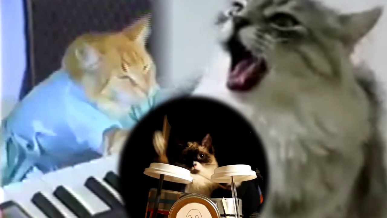 cats playing queen - bohemian rhapsody.mp4