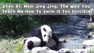 Zhen Xi:Mom Jing Jing. The Way You Teach Me How To Swim Is Too Forcible! | iPanda