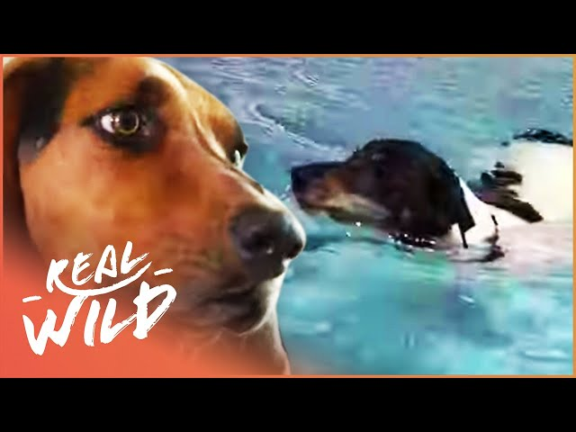 Hero Dog Saves The Life of Another Dog In Deep Water | Pet Heroes EP14 | Real Wild