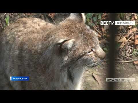 Прокуратура начала проверку в зоопарке Владивостока, где обнаружили брошенных животных
