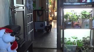 Кот и кошка дома, мы на природе.