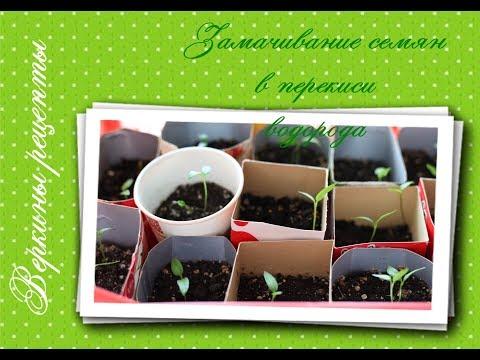 ЗАМАЧИВАНИЕ семян В ПЕРЕКИСИ водорода перед посадкой I мои советы